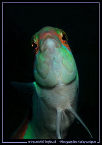 Face to face with this curious Mediterranean rainbow wras... by Michel Lonfat 